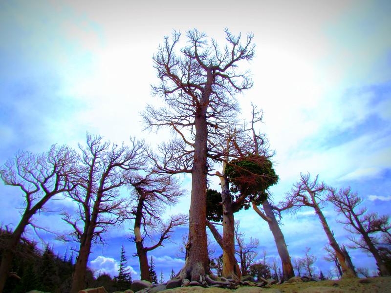 Sky & Scenery (1026).JPG