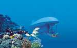 2652Oahu Sub & Navatek Dinner - Atlantis Submarine Hawaii