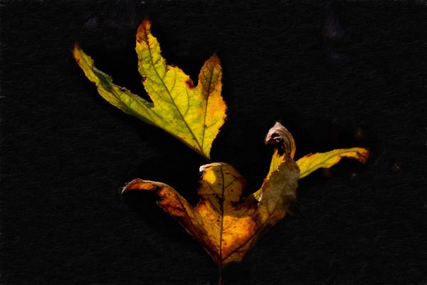 February 2 - Autumn leaves in February.jpg