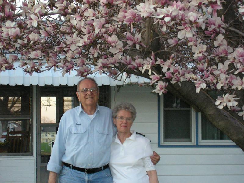 Mom & Pop Tulip 2.JPG