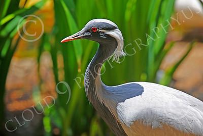 Gray Heron Wildlife Photography