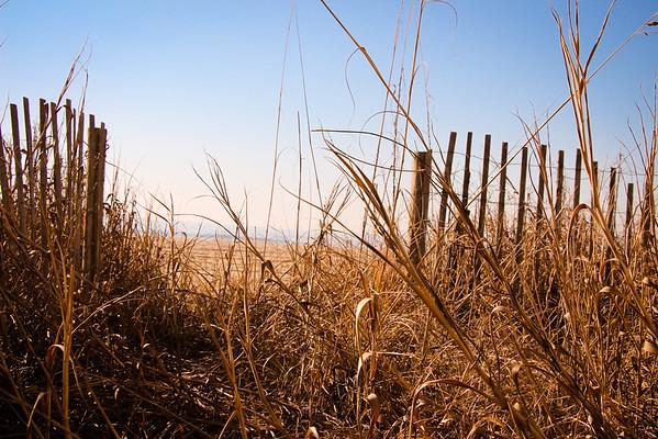 Myrtle beach (winter)