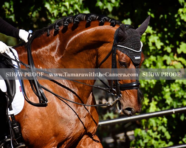 SVE 19 Hang On Oliver 4667.jpg