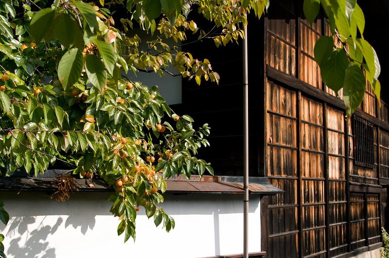 Japan_2010_NAT9428.jpg