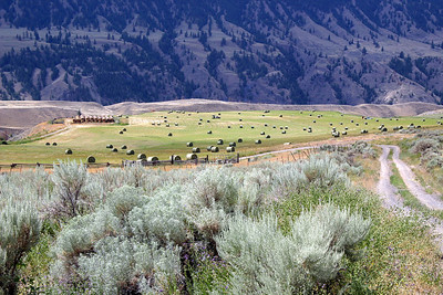 Grass Beyond the Mountains - the Cariboo, BC  2006