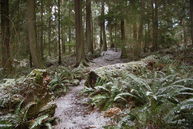 DSC_1076 Wilbert trail snow 1.14.20.jpg