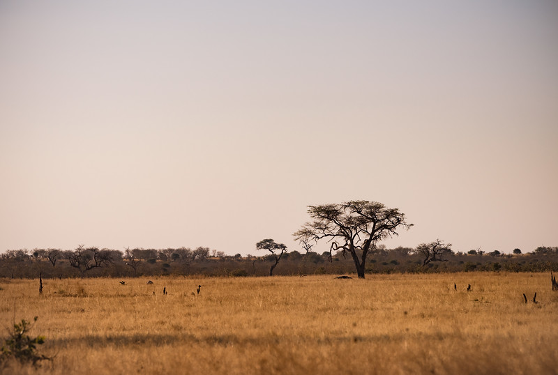 Botswana_June_2017 (3997 of 6179).jpg