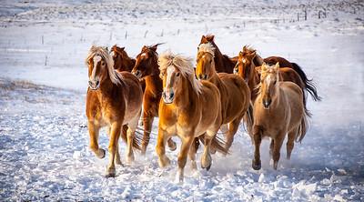 Westcliffe Horses