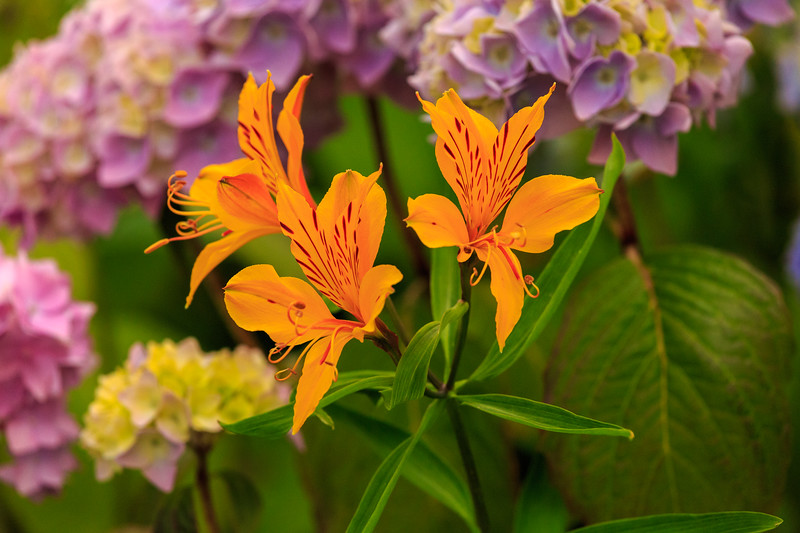 Pretty flowers-4402.jpg