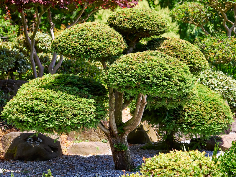 Japanese Gardens Hayward