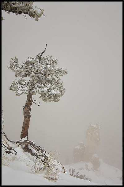 Winter Scape at Bryce Point