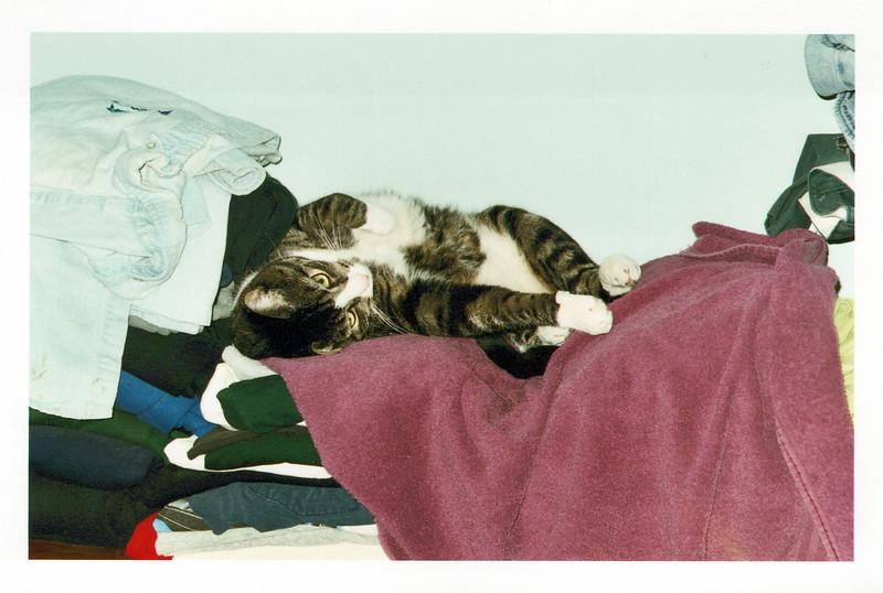 2005_Cats_0006_a.jpg
