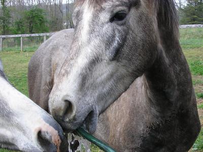 Merrys Horses - April 2005