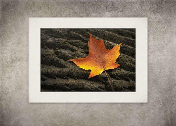 Maple Leaf - $8