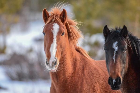 11 2013 Nov 29 Alberta Wild Horses - Elbow Falls*^