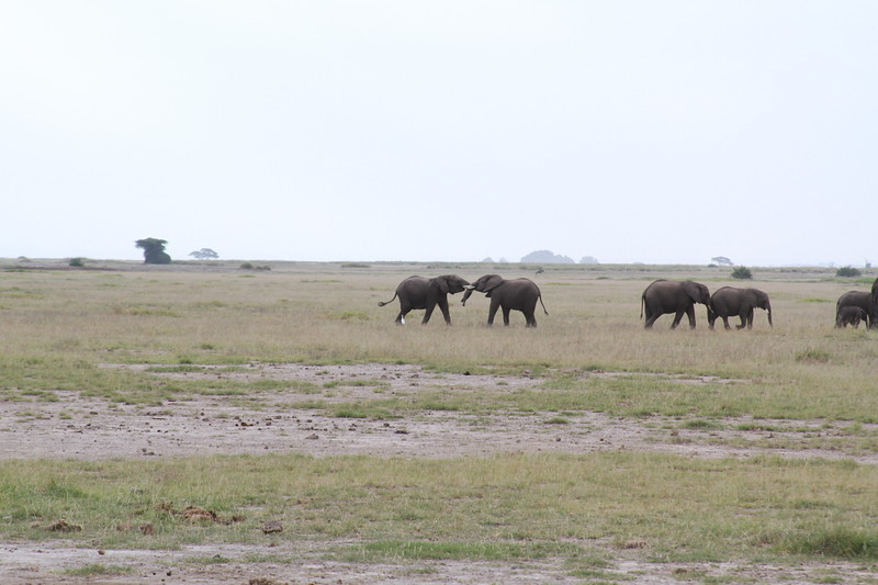 Kenya 2019 #2 320.JPG