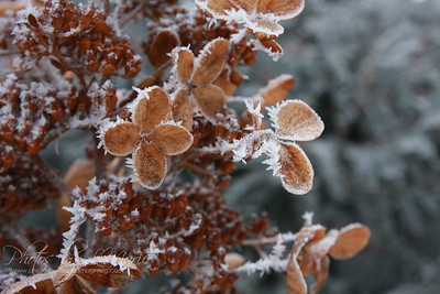 Winter's Frosted Touch