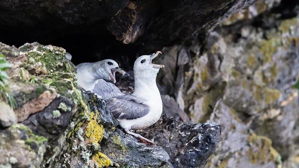2016.7_Shetland Nature