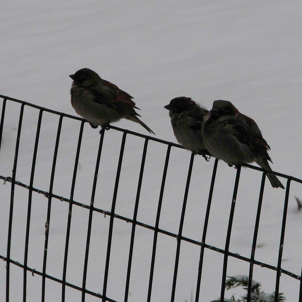 birds on a wire _cropped 2.jpg