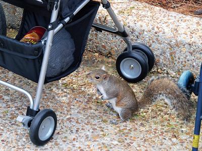 Sea World squirrel thief