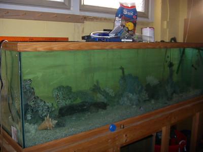 220 Gallon Fish Tank