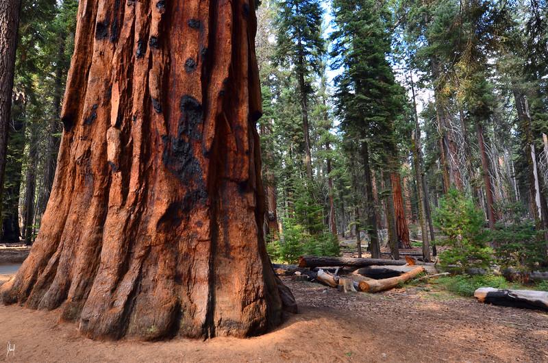 Sequoia in Fall 066.jpg