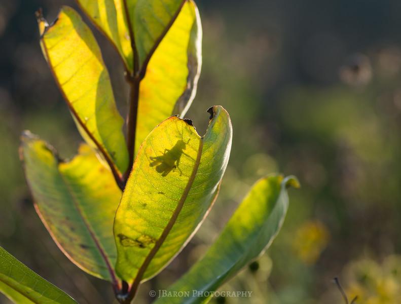 Grasshopper Silhouette