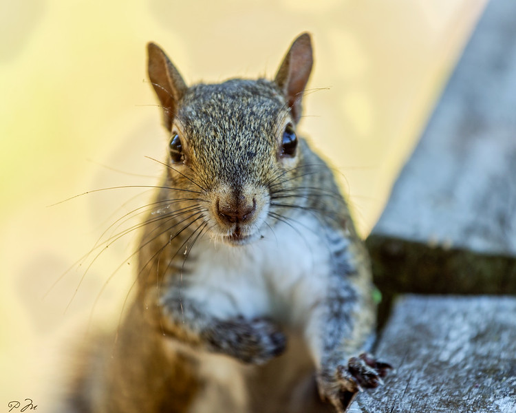 squirrel_DSC3971.jpg