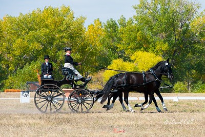 Combined Carriage Driving (CDE)