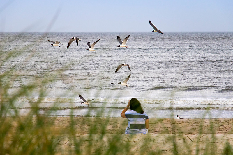 Woman with Seagulls at Caswell Beach (28 May 2016)