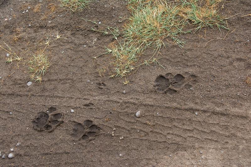 Tanzania footprints-0187.jpg