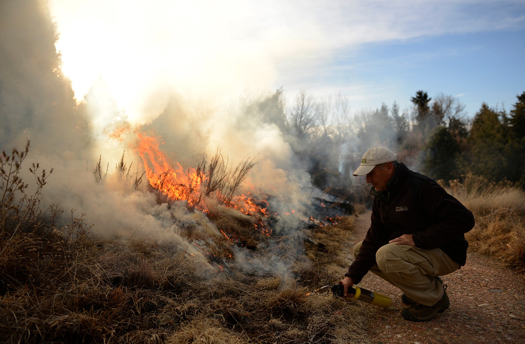 . DENVER, CO. - MARCH 07:  Dan Johnson, Curator of Native Plant Collections at the Denver Botanic Gardens, conducts a controlled burn of the Laura Smith Porter Plains Garden, March, 07, 2013. Fires are a natural part of the plains ecology and help balance the diversity of species. The burn will aid in the germination and growth of different species in the garden. (Photo By RJ Sangosti/The Denver Post)