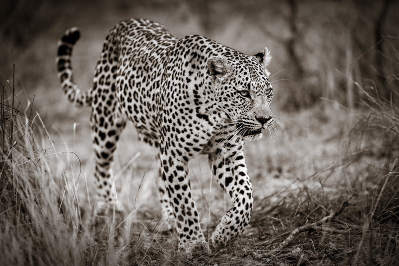 LeopardHills-20191029-1579.jpg