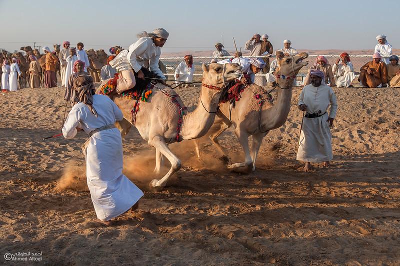 Camel Race  (8).jpg