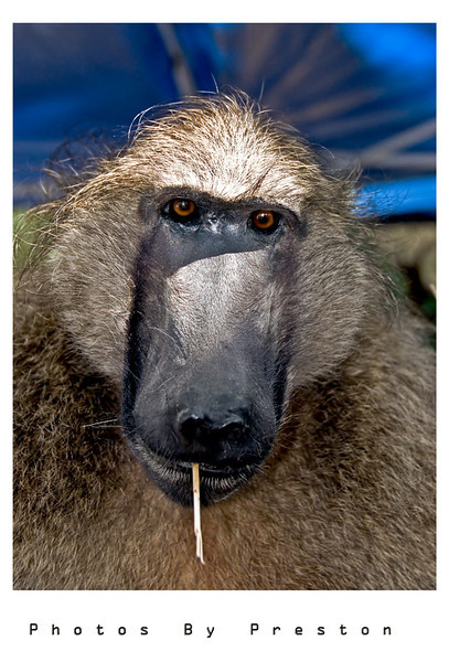 baboon5edit.jpg