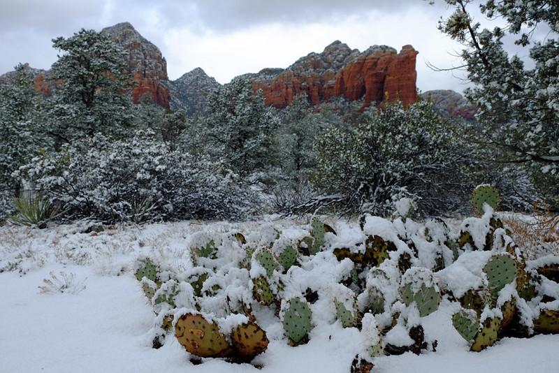 Sedona red rocks cactus 02.jpg