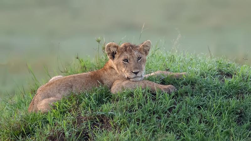 Africa  2019  Masai Mara
