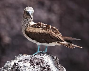 Galapagos Islands - 2019