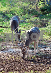 changes-coming-to-texas-parks-and-wildlifes-mldp-and-lamps-programs