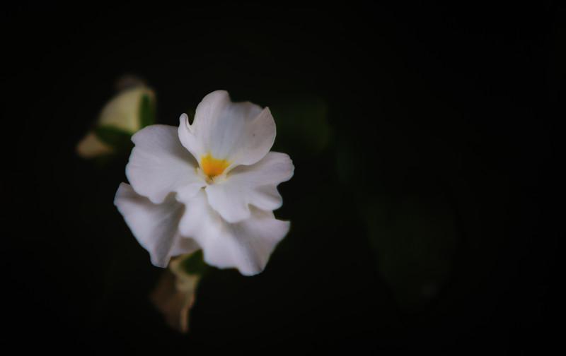 viola 102614-.jpg