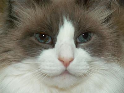 Windypundit Catblogging 2011