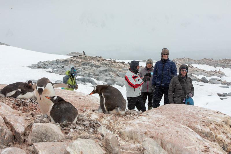 2019_01_Antarktis_05272.jpg