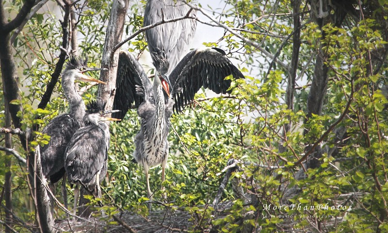 Soon and Very Soon...