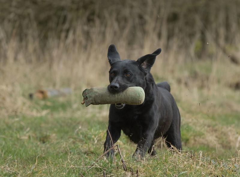 Dogs-5283.jpg