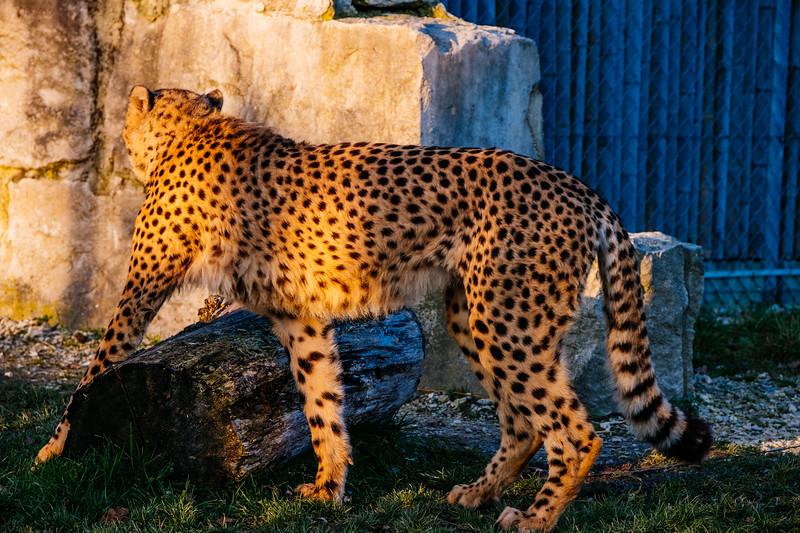 Tonis Zoo-0378.jpg