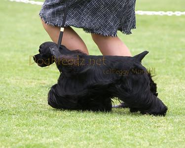 RHKC 2011 - Cocker Spaniels Black