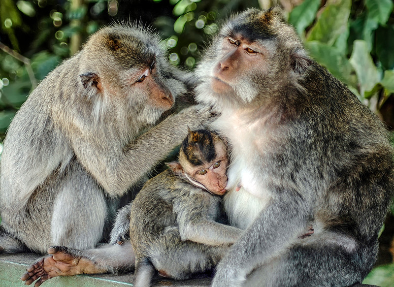 Bali Monkeys-9.jpg