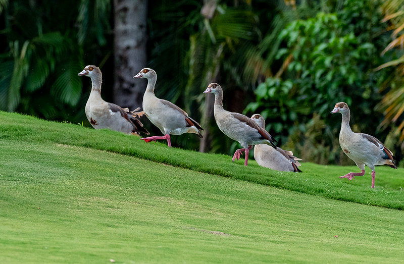2019 PBS Golf Fundraiser -Ken (190 of 247).jpg