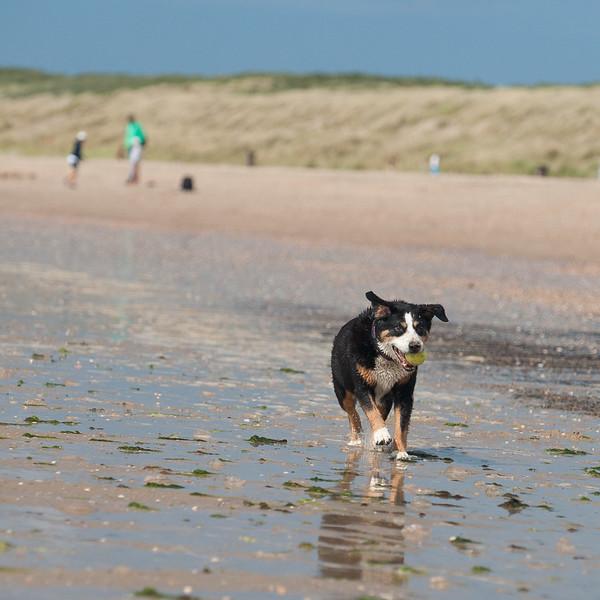honden-05652.jpg