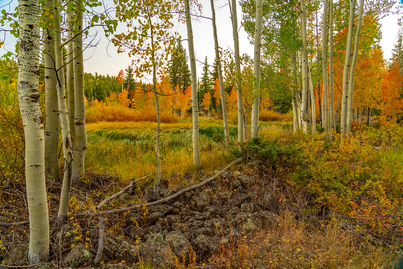 Aspen in Autumn Just After Sunset